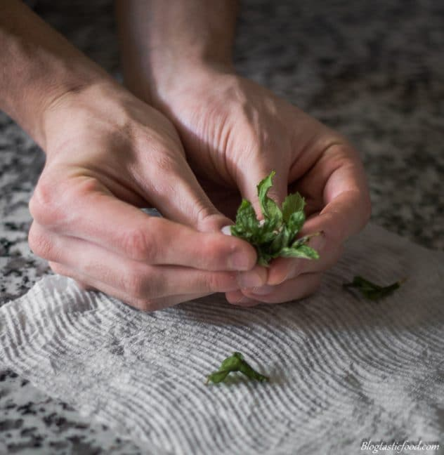 A photo of someone ripping up some mint leaves with there fingers.